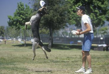 Initiere dresaj canin in Bucuresti Experiente cadou