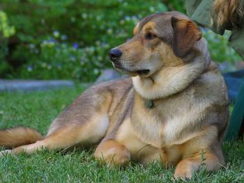 Initiere dresaj canin in Cluj-Napoca Experiente cadou