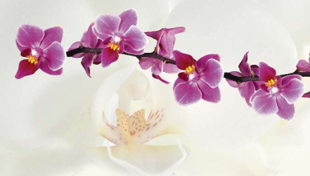 Panou bucatarie decorativ protectie plita model Orhidee Alba si Mov 600x600 mm Placi decorative