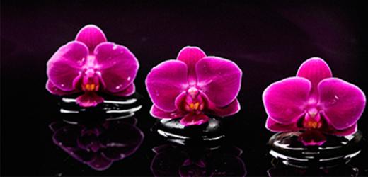 Panou bucatarie protectie plita aragaz antistropire print UV model Orhidee 11 600x500 mm Placi decorative